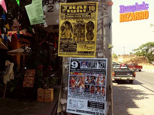 Peleas de Muay Thai en Chiang Mai