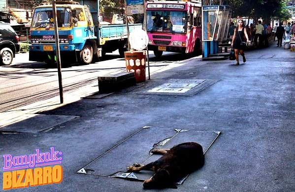 Perro en Bangkok Tailandia