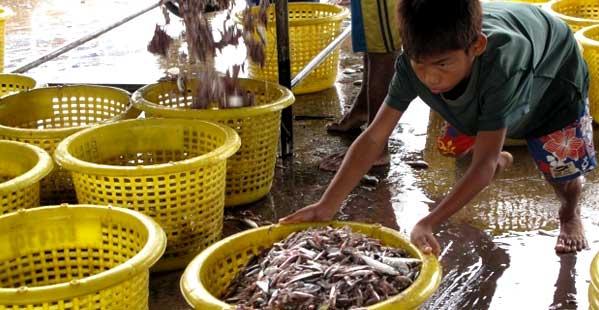 El sector pesquero lo trabajan inmigrantes birmanos y camboyanos. A veces niños. Y muchos trabajadores mueren en alta mar por el maltrato de sus patrones. Foto: Irrawadi.