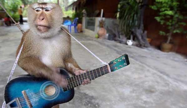 show monos tailandia