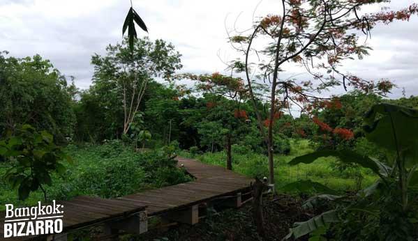 Vivir en Chiang Mai