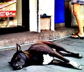 Perro Bangkok