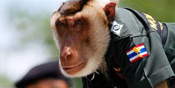 Mono policía en Tailandia