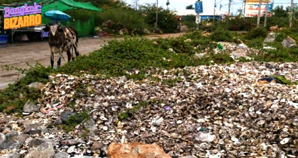 vertedero ostras Tailandia