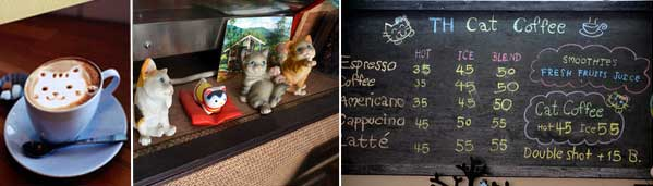 cafe gatos chiang mai