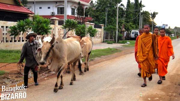 Monjes animales camboya