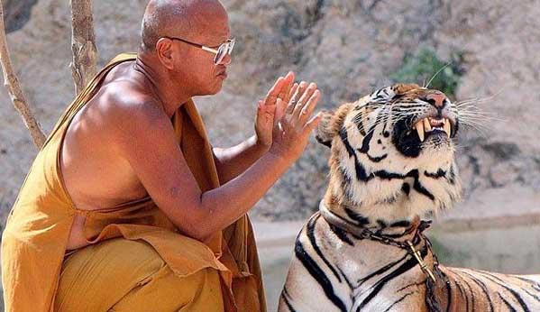 Templo de los Tigres de Kanchanaburi
