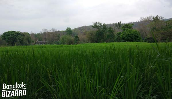 Selva Chiang Mai